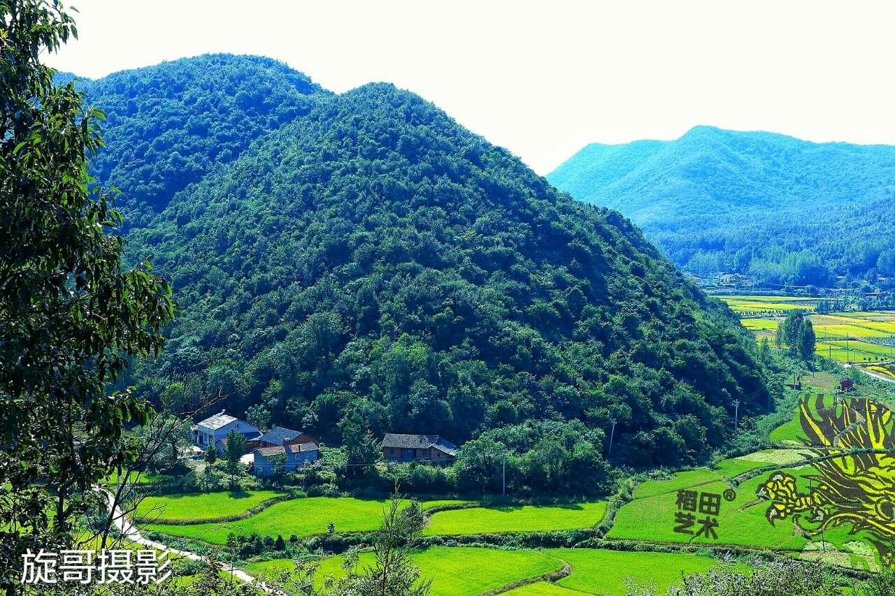 随州大洪山风景区的稻田艺术